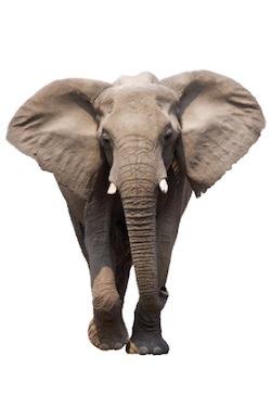 The elephant in the corner of all types of coaching is usually a personal growth coaching issue